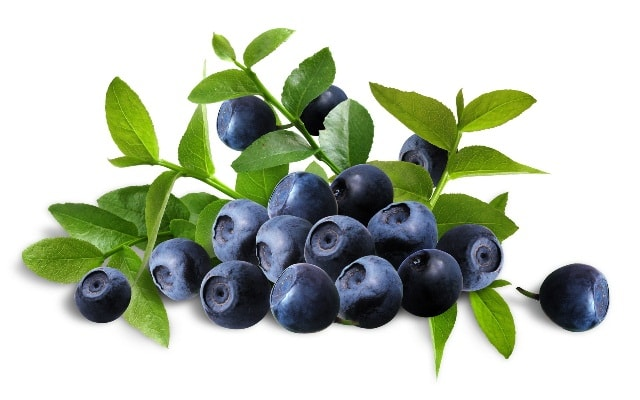superfoods-to-lose-belly-fat-blueberries