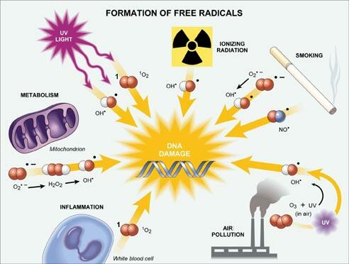formation-of-free-radicals