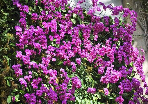 Orchids Garden Inspiration