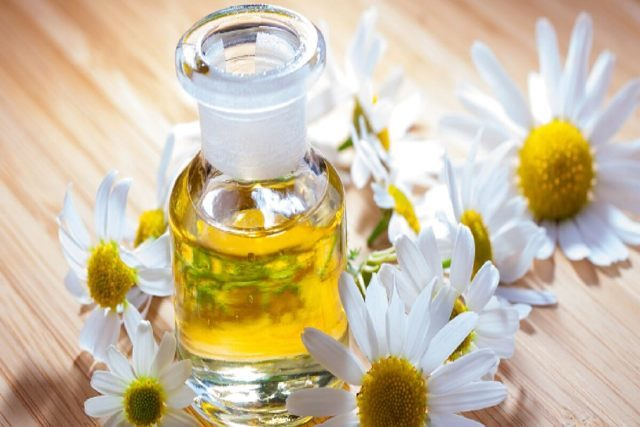 Best Essential Oils for Stress and Anxiety - Chamomile